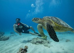 Surfing and Scuba Diving with Dive Oahu